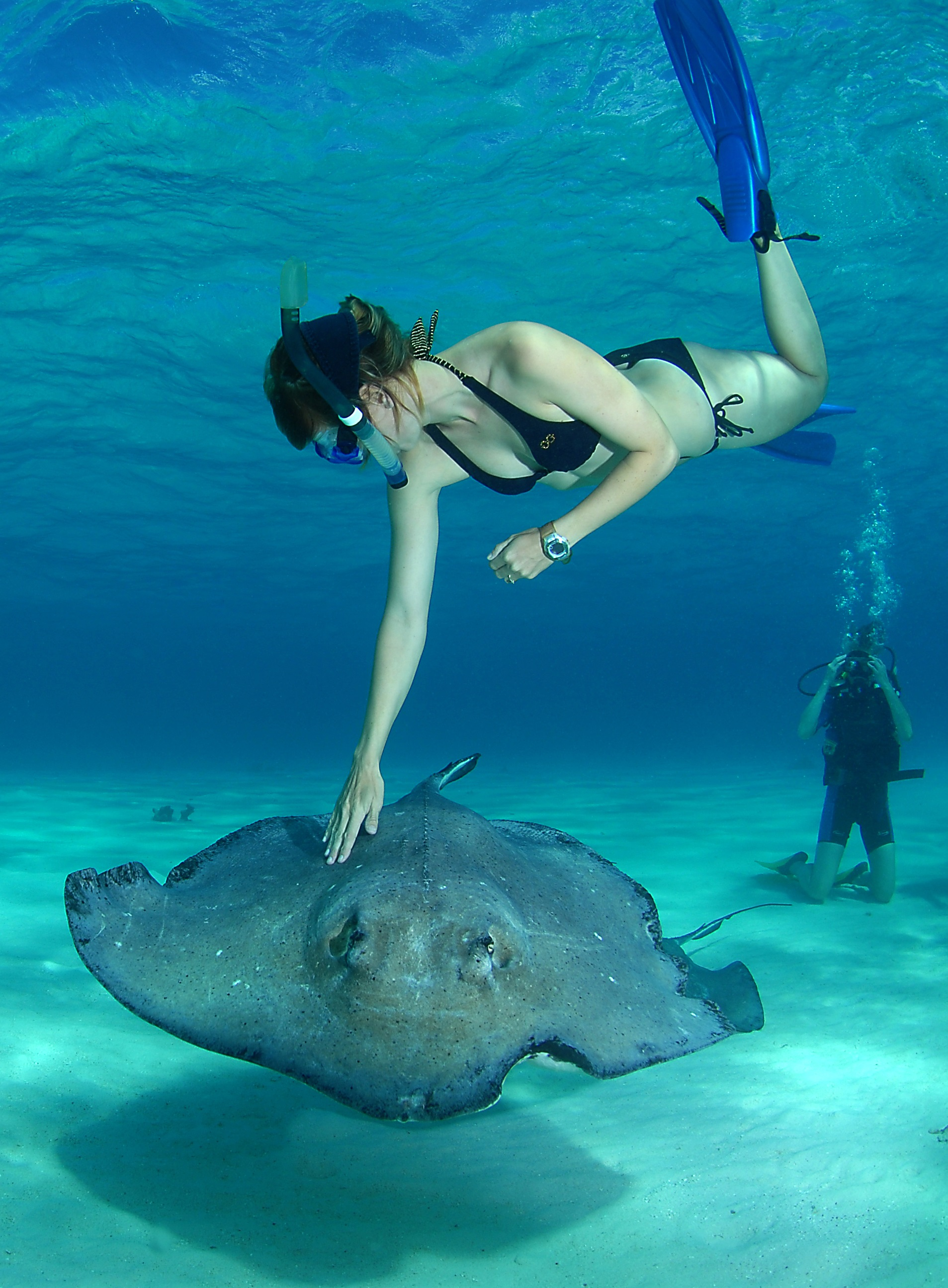 Meeting iguanas and learning to dive in the cayman islands - Dive dive dive ...