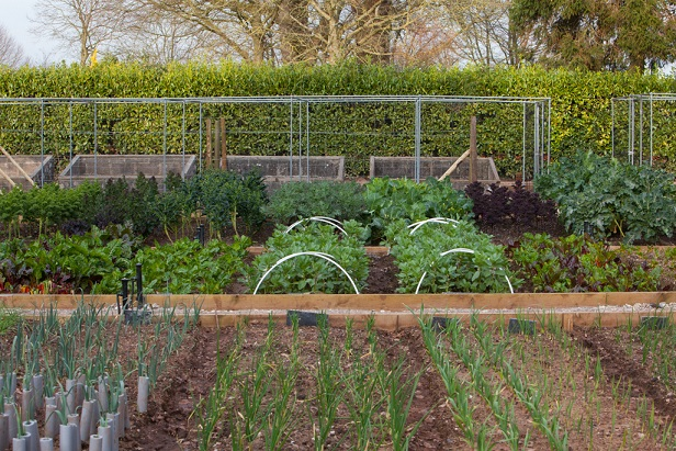 The Pigs describe themselves as 'a restaurant with rooms', with the kitchen garden at the core
